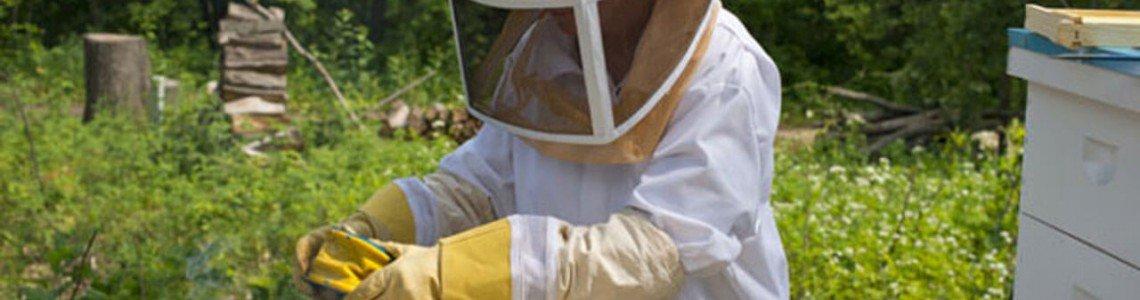 Система за видеонаблюдение на пчелин – как да изберем моделите камери?